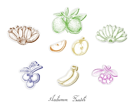 Autumn Fruits, Set of Hand Drawn Sketch of Assorted Fruits are Harvested in Autumn. Trendy Origami Deep Paper Art Carving Style.