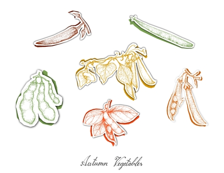Autumn Vegetables, Set of Hand Drawn Sketch of Assorted Pod Vegetables are Harvested in Autumn. Trendy Origami Deep Paper Art Carving Style.