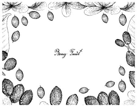 Berry Fruits, Illustration Frame of Hand Drawn Sketch Jambolan, Java Plum, Black Plum or Syzygium Cumini and Japanese Barberies or Berberis Thunbergii Fruits Isolated on White Background. Illustration