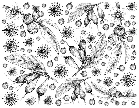 Hand Drawn Wallpaper of Tropical Fruits Background Çizim