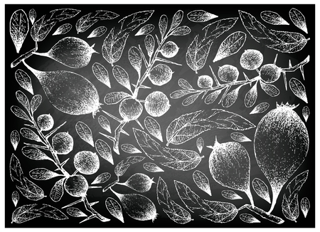 Exotic Fruits, Illustration Wallpaper Background of Hand Drawn Sketch of Humbug or Easter Pears and Kei Apple or Dovyalis Caffra Fruits on Black Chalkboard.