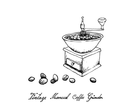 Illustration Hand Drawn Sketch of Roasted Coffee Beans with Traditional Manual Coffee Grinder Isolated on White Background.