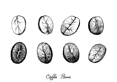 Illustration Hand Drawn Sketch of Assorted Roasted Coffee Beans Isolated on White Background. Archivio Fotografico - 126527553