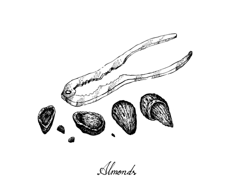 Illustration of Dried Almonds with A Metal Nutcracker, Good Source of Dietary Fiber, Vitamins and Minerals.