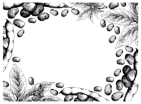 Illustration Frame of Hand Drawn Sketch Fresh Fava Bean or Broad Beans and Castor Beans or Ricinus Communis on White Background. Banque d'images - 124018445