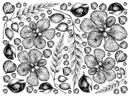 Illustration  of Terminalia Catappa, Malabar Almond or Sea Almond Fruits and Garbanzo Beans or Chick Pea. Vettoriali