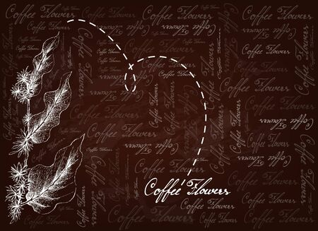 Illustration of Fresh White Coffee Blossom or Coffea Flowers with Leaves on Brown Background.