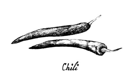 Herbal Plants, Illustration of Hand Drawn Sketch Red Chili Pepper Used for Seasoning in Cooking.