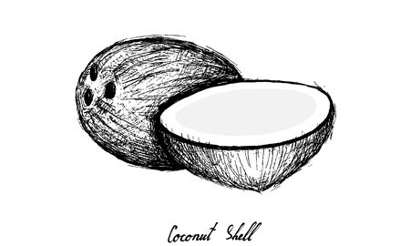 Tropical Fruits, Illustration of Hand Drawn Sketch Coconut or Cocos Nucifera Fruits Isolated on White Background.