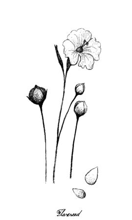Illustration of Hand Drawn Sketch Flax Plants or Linum Usitatissimum with Flower and Seed Isolated on White Background.