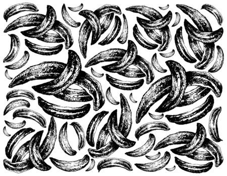 Herbal Plants, Hand Drawn Illustration Background of Dried Caraway, Meridian Fennel or Persian Cumin Used for Seasoning in Cooking.