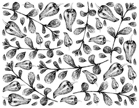 Herbal Plants, Hand Drawn Illustration of Fresh Marjoram or Origanum Majorana and Bell Peppers Used for Seasoning in Cooking.