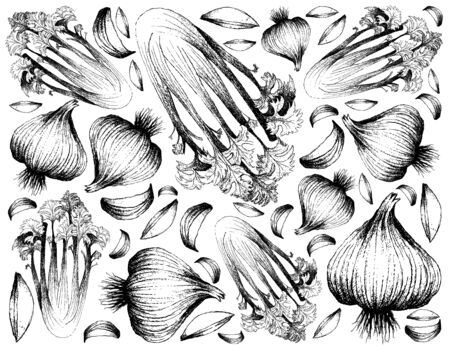Herbal Plants, Illustration of Hand Drawn Sketch Apium Graveolens or Celery and Garlic Bulb Isolated on White Background. Stock Photo