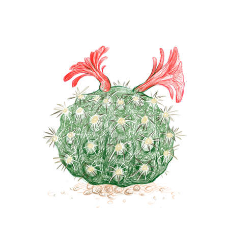 Illustration Hand Drawn Sketch of Borzicactus Cactus with Pink Flower for Garden Decoration.