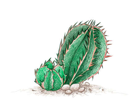 Illustration Hand Drawn Sketch of Euphorbia Cereiformis or Milk Barrel Cactus Plant. A Succulent Plants with Sharp Thorns for Garden Decoration.