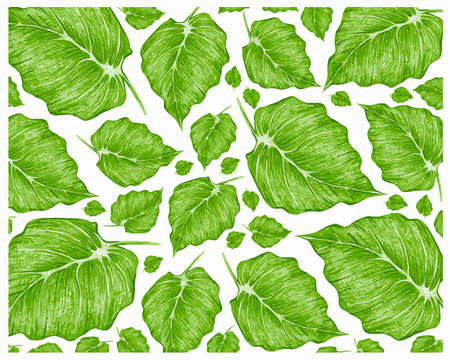 Ecology Concepts, Illustration of Green Leaves of Elephant Ear, Philodendron or Colocasia Plants Background. 矢量图像