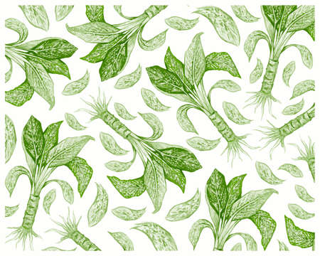 Illustration Background of Beautiful Green, Pink and White Dieffenbachia, Aglaonema, Chinese Evergreens or Dumb Cane Plant. 矢量图像