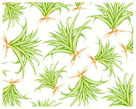Illustration Background of Pandanus Veitchii Plants or Stripes Screw Pine Decoration in The Beautiful Garden. A Agave Plants with Thick and Fleshy Leaves.