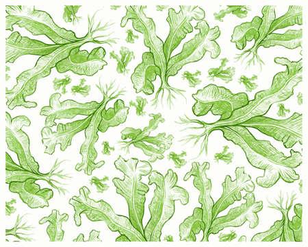 Illustration Background of Green Bird's Nest Fern or Asplenium Nidus Plants for Garden Decoration. 矢量图像