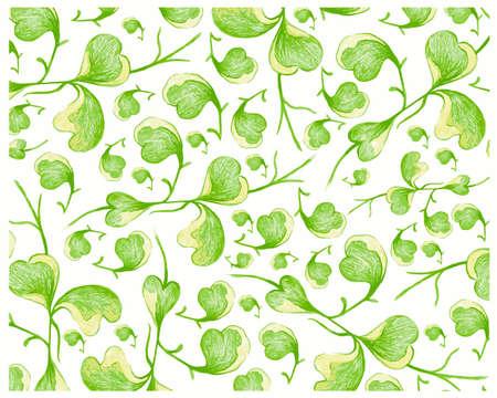 Illustration of Hoya Kerrii Craib or Heart Leaf Hoya on White Background.