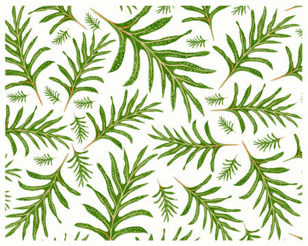 Illustration Background of Microsorum Scolopendria, Phymatosorus Scolopendria, Monarch Fern or Musk Ferns.