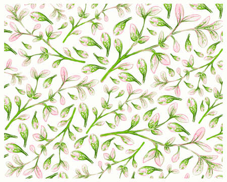 Illustration Background of Manila Tamarind or Pithecellobium Dulce Benth with Green Leaves on Tree Branch. 矢量图像