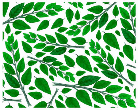 Illustration Vector of Beautiful Fresh Green Leaves Isolated on A White Background.