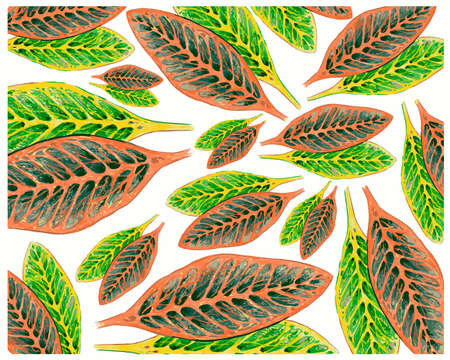 Ecological Concept, Illustration Background of Beautiful Green and Yellow Spot Croton Plants or Codiaeum Variegatium Plants For Garden Decor. 矢量图像