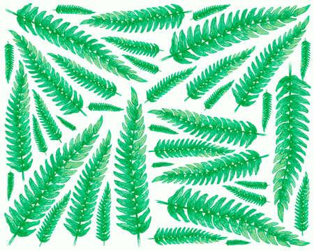 Ecological Concept, Illustration Background of Beautiful Pteridophyta or Tassle Fern Leaves. 矢量图像