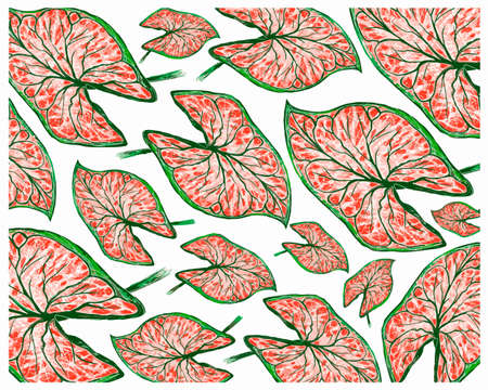 Ecological Concept, Illustration Background of Elephant Ear, Colocasia, Caladium, Heart of Jesus or Angel Wings Plants in A Garden.