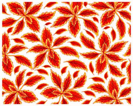 Ecological Concept, Illustration Background of Beautiful Purple Coleus, Solenostemon, Plectranthus Scutellarioides, Solenostemon Scutellarioides, Solar Sunrise or Flame Nettle Plants For Garden Decoration.