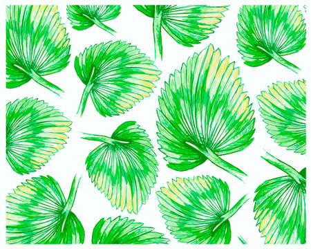 Ecology Concepts, Illustration Background of Licuala Orbicularis Palm, A Tropical Plant Growing in Warm Temperate Climates.