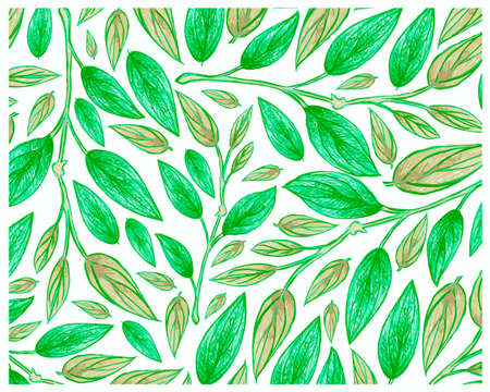 Ecology Concepts, Illustration Background of Green Leaf of Philodendron Melanochrysum Linden Plants.