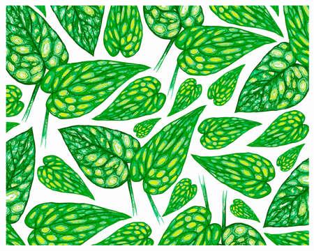 Ecology Concepts, Illustration Background of Monstera Peru or Karstenianum Plants.