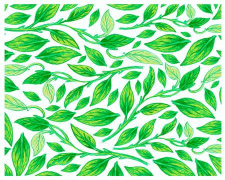 Ecology Concepts, Illustration Background of Epipremnum Aureum, Golden Pothos, Hunter's Robe, Ivy Arum, Money Plant or Silver Vine Creeper Plant.