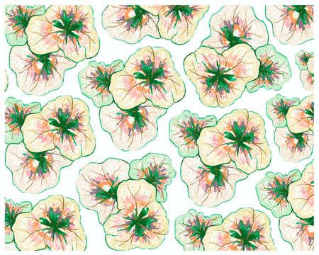 Ecological Concept, Illustration Background of Beautiful Purple Coleus, Solenostemon, Plectranthus Scutellarioides, Solenostemon Scutellarioides, Solar Sunrise or Rainbow Master Blend Plants For Garden Decoration.