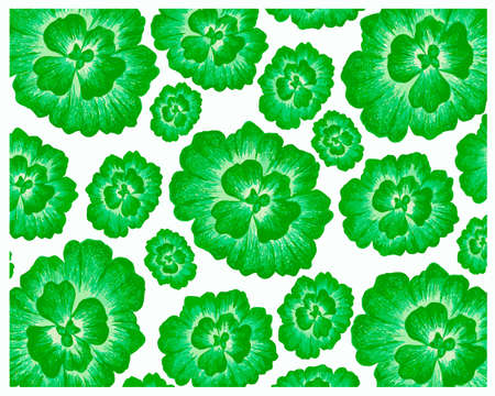 Ecology Concepts, Illustration Background of Pistia Stratiotes, Water Cabbage, Water Lettuce, Nile Cabbage or Shellflower.
