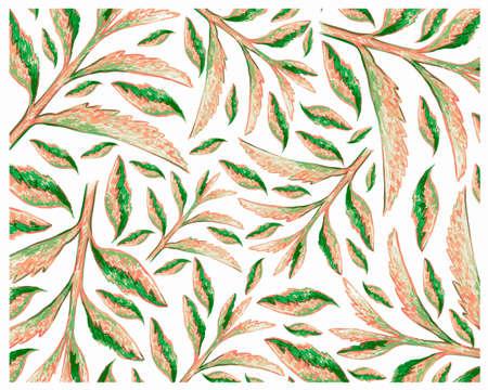 Ecology Concepts, Illustration Background of Beautiful Kalanchoe Tubiflora Succulent Plants for Garden Decoration.