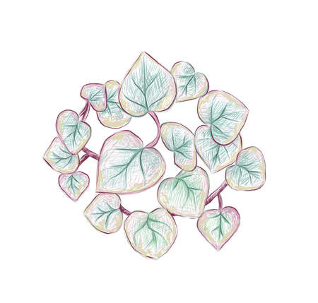 Illustration Hand Drawn Sketch of Ceropegia Woodii Variegata, String of Hearts or Rosary Vine Plant. A Succulent Plants for Garden Decoration. 矢量图像