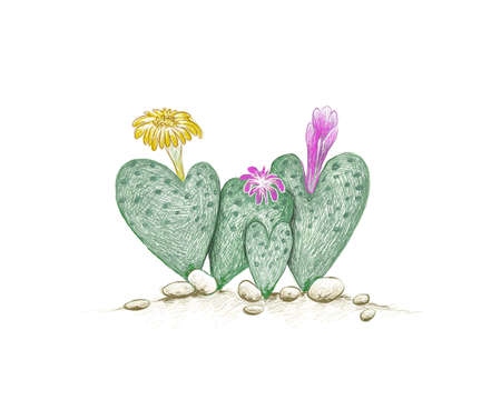 Illustration Hand Drawn Sketch of Conophytum Cordatum or Living Pebble with Pink and Yellow Flower, A Succulent Plants with Heart Shape for Garden Decoration. 矢量图像
