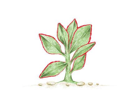 Illustration Hand Drawn Sketch of Crassula Arborescens Undulatifolia or Ripple Jade. A Succulent Plants for Garden Decoration.