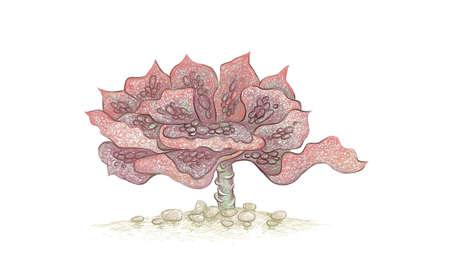 Illustration Hand Drawn Sketch of Echeveria Etna. A Succulent Plants for Garden Decoration.