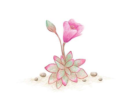 Illustration Hand Drawn Sketch of Anacampseros Rufescens, Sand Rose or Sunrise Succulent Plant. A Succulent Plants for Garden Decoration. 矢量图像