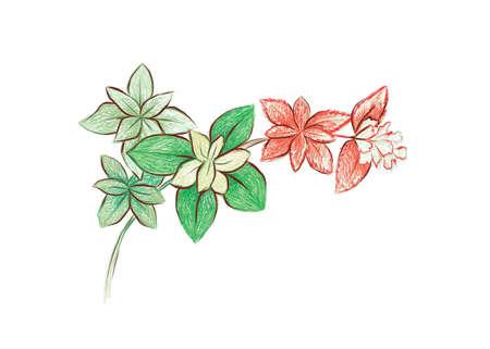 Illustration Hand Drawn Sketch of Crassula Marginalis Rubra Variegata or Calico Kitten. A Succulent Plants for Garden Decoration.