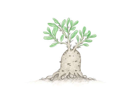 Illustration Hand Drawn Sketch ofFockea Edulis, Hottentot Bread or Kambroo, A Succulent Plants with Heart Shape for Garden Decoration.