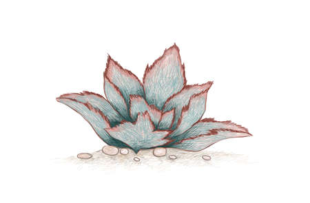Illustration Hand Drawn Sketch of Kalanchoe Beharensis, Velvet Leaf, Felt Bush or Elephant's Ear Kalanchoe. A Succulent Plants for Garden Decoration.