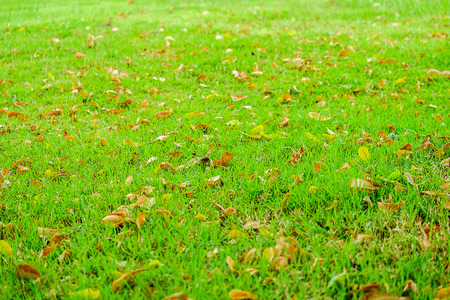 Green grass with dry leaves falling on Stock Photo