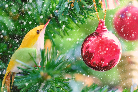 Bird Christmas ornament and red balls decoration hanging on tree with snow effect 스톡 콘텐츠