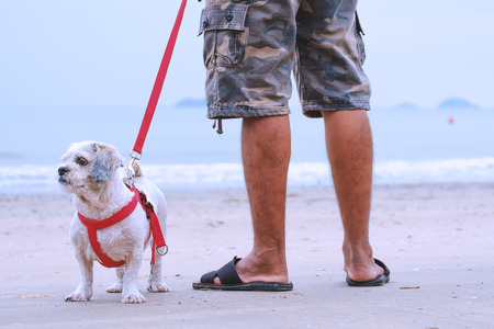 White short hair Shih tzu dog and a man standing on the white sand, summer beach concept Stock Photo