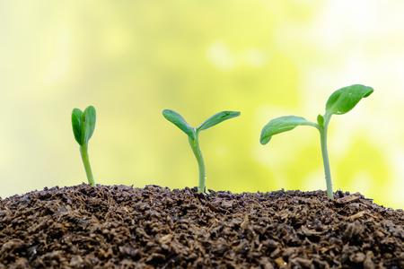 Sprössling wächst vom Boden auf unscharfem natürlichem Hintergrund für grüne Umweltkonzept